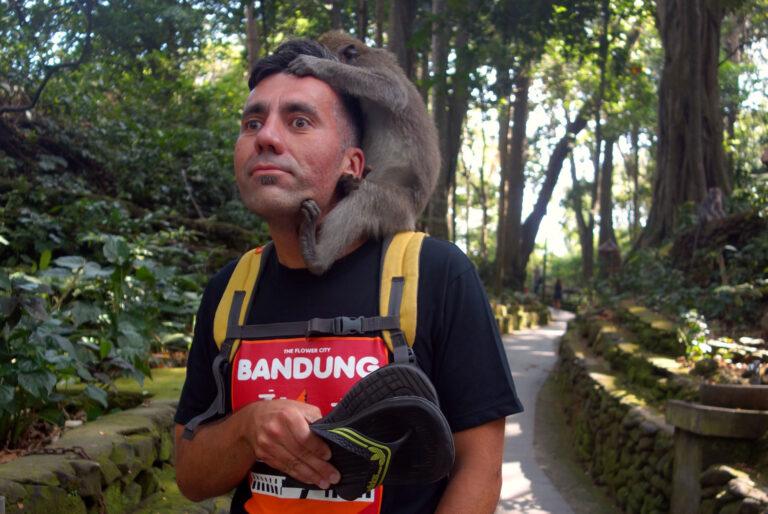 Affenbiss im Monkey Forest, Ubud