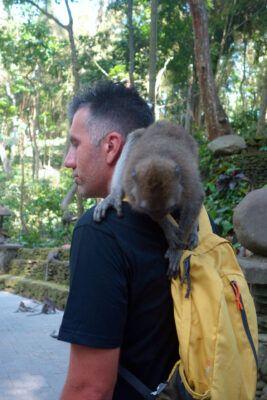 makaken angriff monkey forest 02