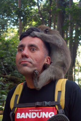 makaken angriff monkey forest 06