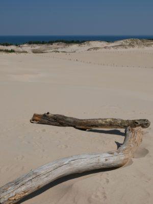 Ostsee Düne Holz